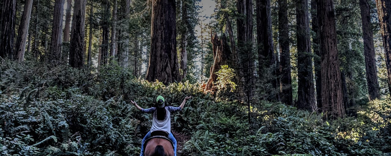 Horseback ride through the redwoods