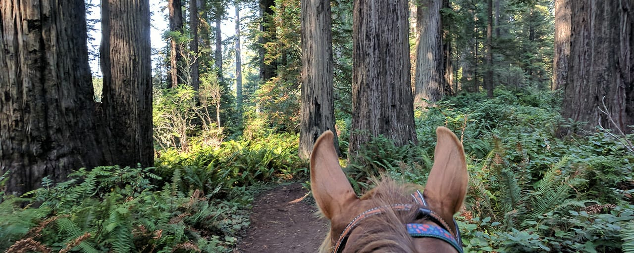Horseback in the redwoods